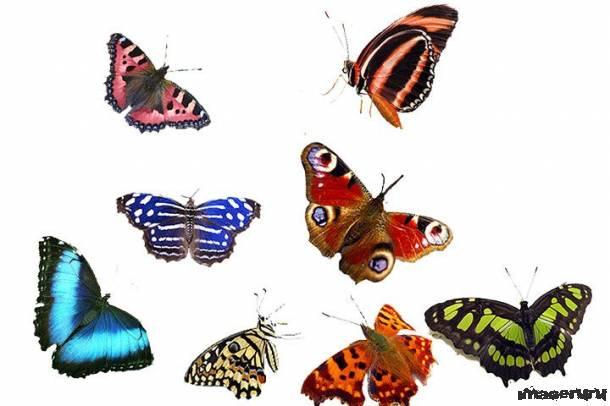 Бабочки в формате PSD