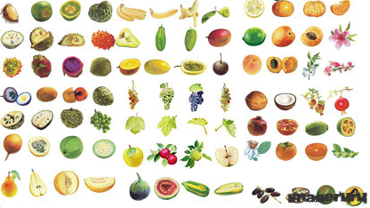 Векторные фрукты более 160 штук