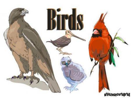 Птицы векторные 75 шт.