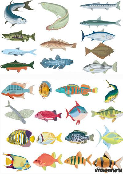 66 векторных рыб