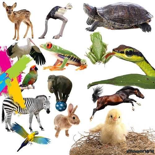 PSD клипарт - животные
