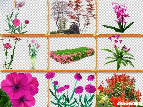Разные растения на прозрачном фоне