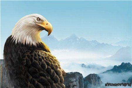 Орёл на вершине горы