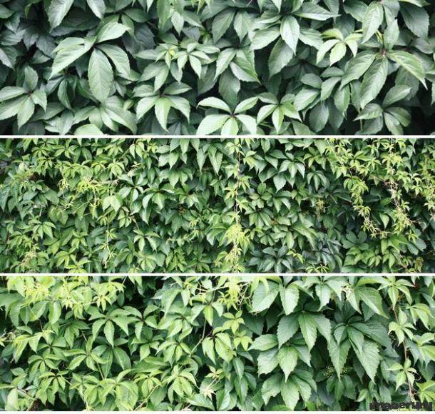 Листья для фона