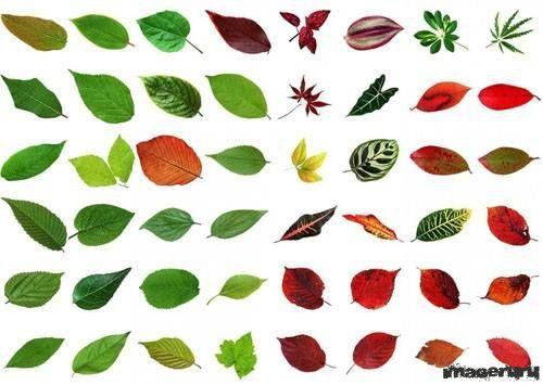 Разноцветные осенние листья