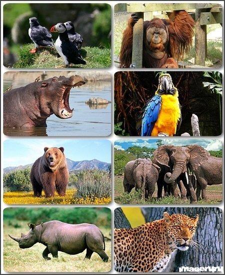 Мир диких животных