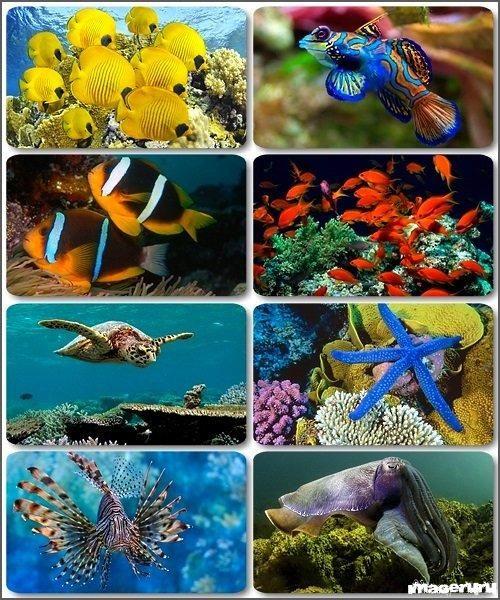Подводный мир - обои на рабочий стол