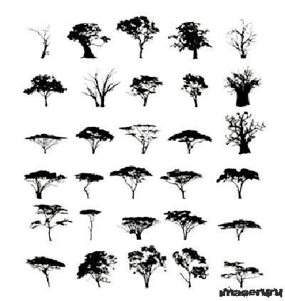 Черно-белые деревья