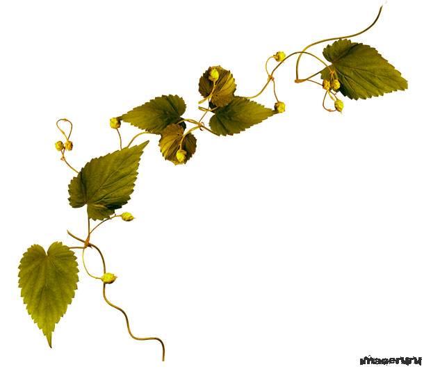 Растительный клипарт