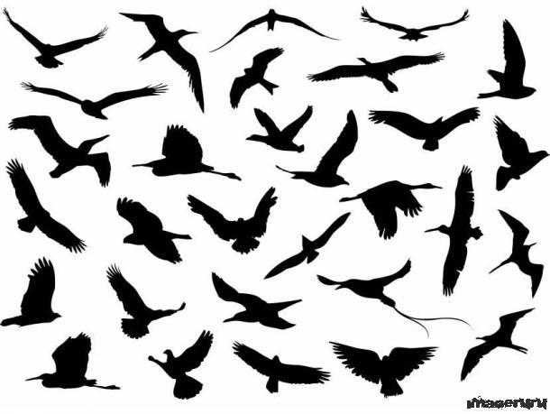 Силуэты летящих птиц
