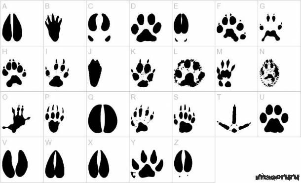 Набор визуальных шрифтов №1