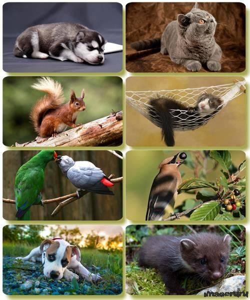 Эти забавные животные 4