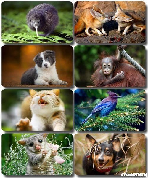 Эти забавные животные 5