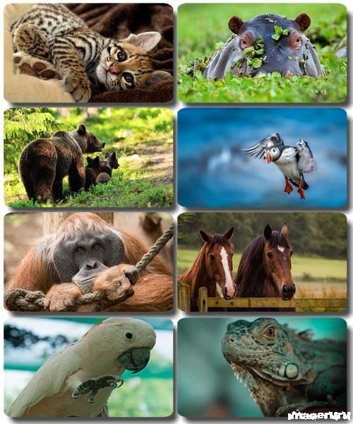 Эти забавные животные 7