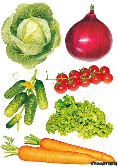 Овощи в векторе