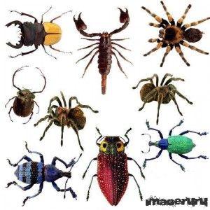 Насекомые - пауки, жуки, скорпионы