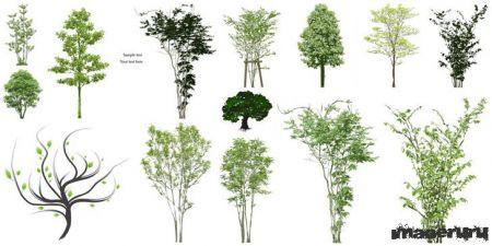 Векторные деревья и кустарники