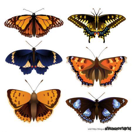 Бабочки - иконки
