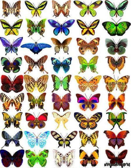 Векторные бабочки