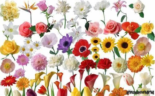 Цветы в PSD формате