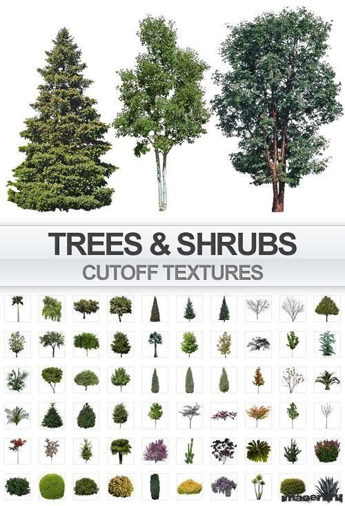 Деревья и кустарники, прозрачный фон