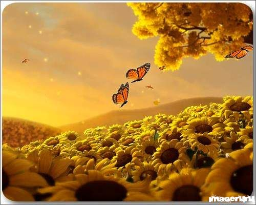 Экранная заставка Beauty of Nature