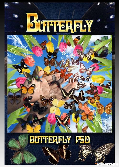 PSD исходник  - Порхающие Бабочки