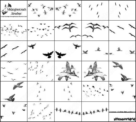 Птицы - кисти для фотошопа