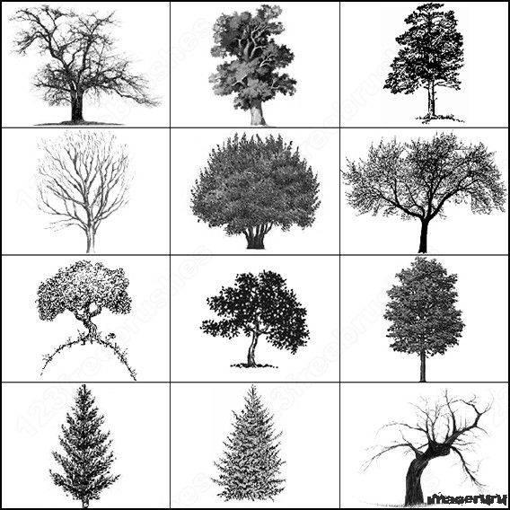 Деревья - кисти для фотошоп