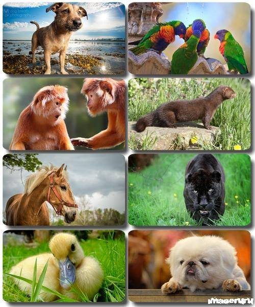 Эти забавные животные 3