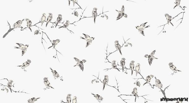 Рисованые птички