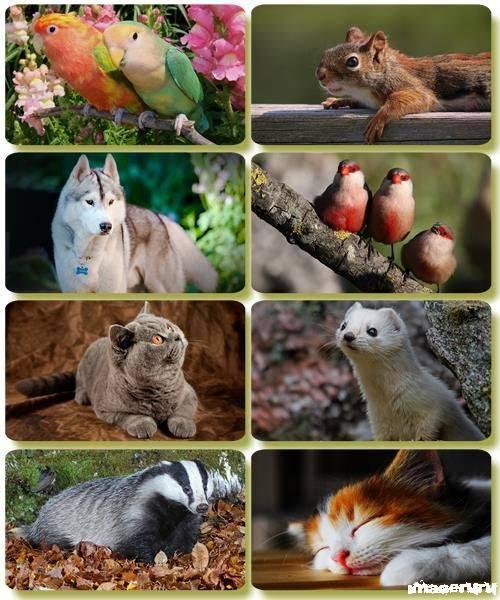 Эти забавные животные 6
