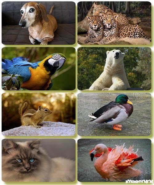 Эти забавные животные 8