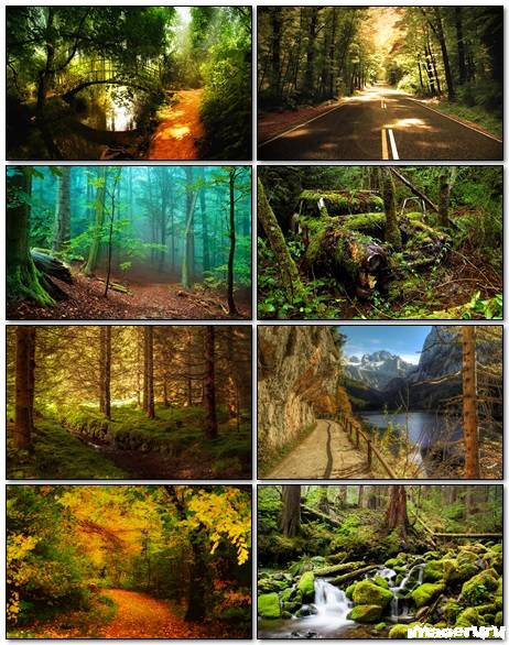 Nature Wallpapers Mix 33