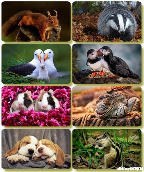 Эти забавные животные